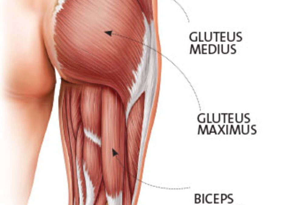 Glute Activation….. Tips To Make It Work For You